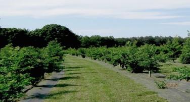 Truffle Trees & Consultancy